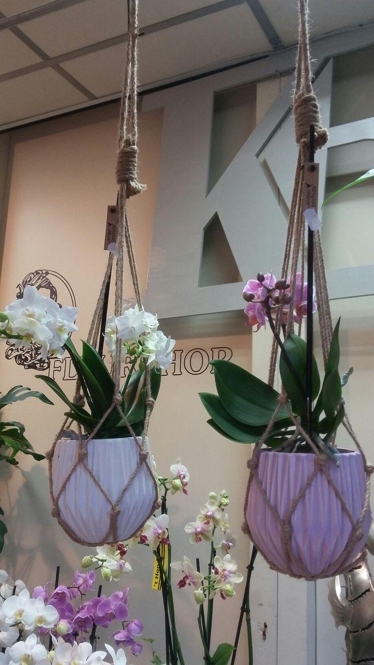 Orchidee in pot met macramé
