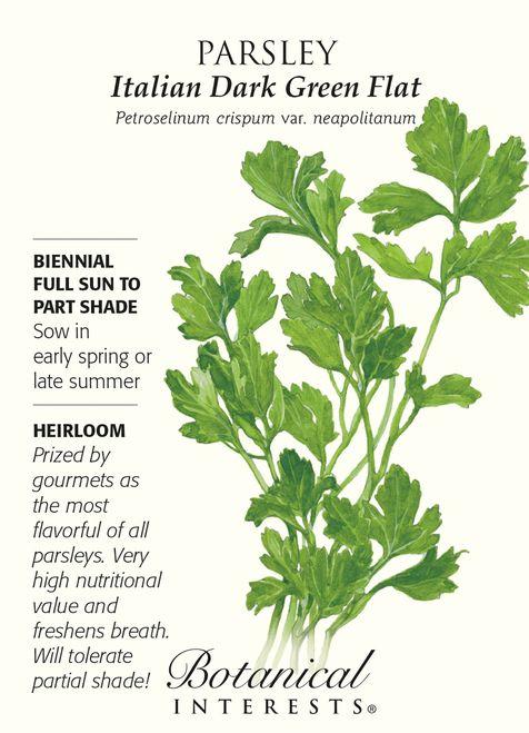 Italian Dark Green Flat Parsley Seeds - 2 grams