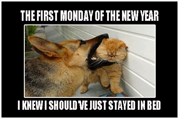First Monday Of The New Year Funny Meme   Desktop Backgrounds