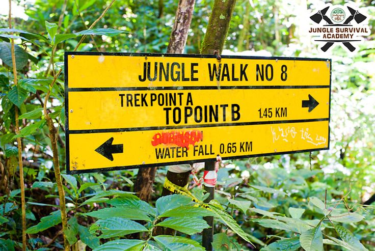 Undergo the most unusual experience of your life through #JungleSurvivalAcademy. Join the November batch now!  Book: http://www.bandhavgarh365.com/jungle-survival-activity/ #wildernesssurvival #JungleSurvival #Jungle