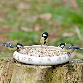 Marjolein Bastin Feeding Dish with Robins