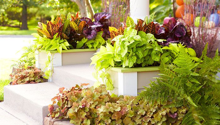 136 Best Images About Curb Appeal On Pinterest Shrubs