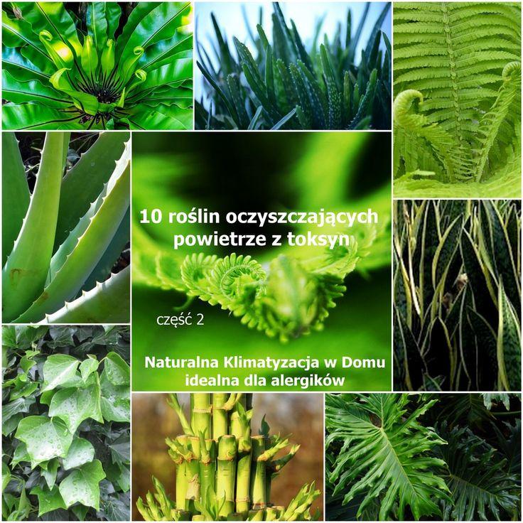 zdrowie.hotto.pl.pl-popularne-rośliny-domowe-oczyszczające powietrze-klimatyzacja-dla-alergików-cz.2