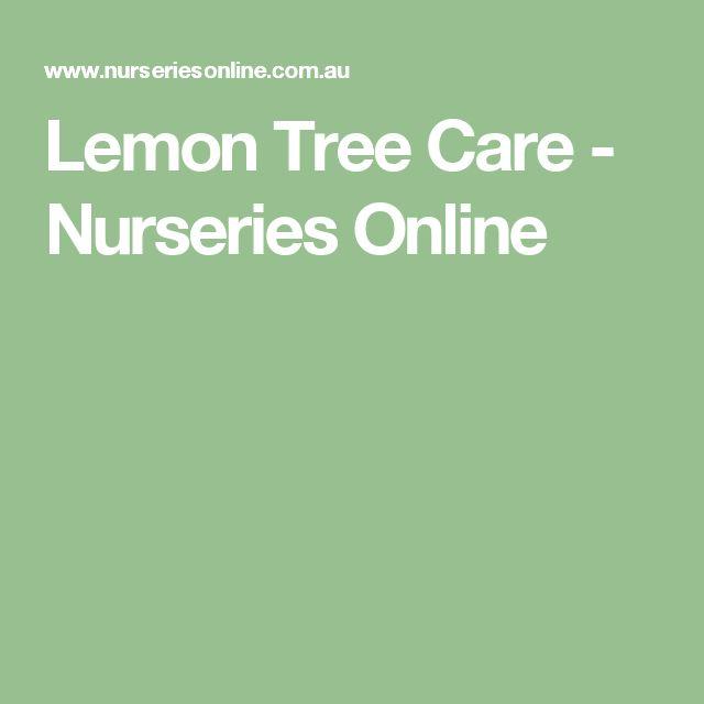 Lemon Tree Care - Nurseries Online