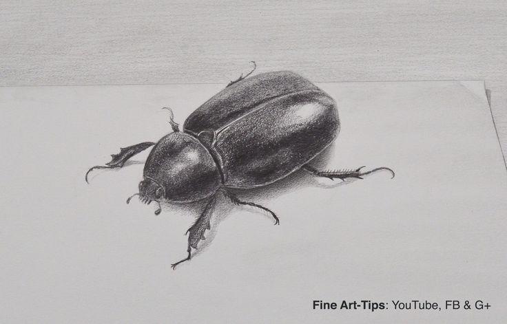 How to Draw a Beetle With Pencil - Insect   #art #drawing #FineArtTips #beetle #artistleonardo #insect #LeonardoPereznieto #realistcdrawing  Take a look to my book here: http://www.artistleonardo.com/#!ebooks-english/cswd