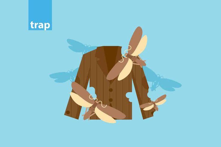 skoros-rouxon-trap.jpg (1080×720)