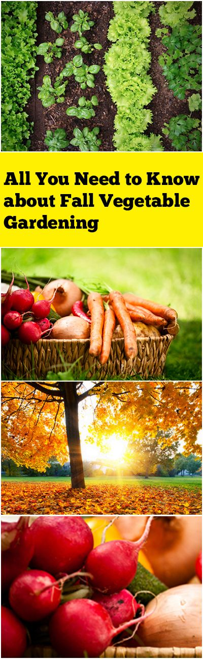 All You Need to Know about Fall Vegetable Gardening