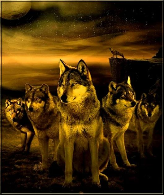 Tattoo Quotes Wolf: 17 Best Ideas About Wolf Pack Tattoo On Pinterest