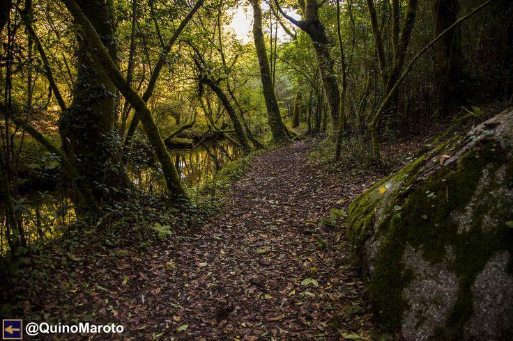 Camino Portugués. Rio Barosa