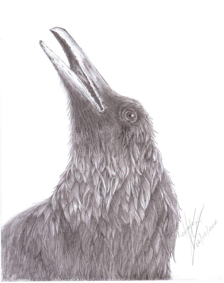 Raven: pencil & ink