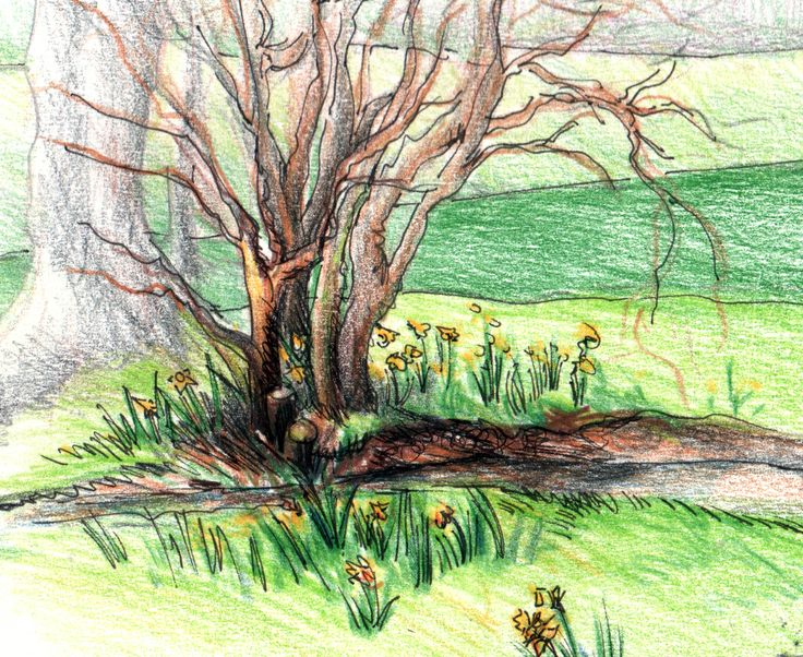 Sketch of tree & daffodils, Watermill Farm, Rushlake Green, East Sussex, UK by E.Hurni