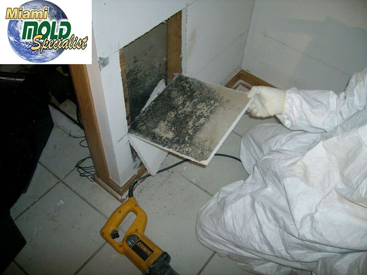 "Mold Removal North Miami Beach  We provide a simple, no-nonsense approach to #fixing #mold #problems that we like to call ""Miami Mold Specialists."" Call Us Now 8305-763-8070 Guaranteed LOWER price than the competitor! http://www.miamimoldspecialists.com/ http://www.miamimoldspecialist.com/"