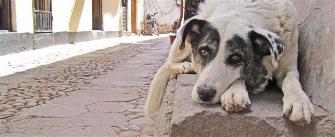 Peru Dog Rescue, located on the outskirts of Cusco.