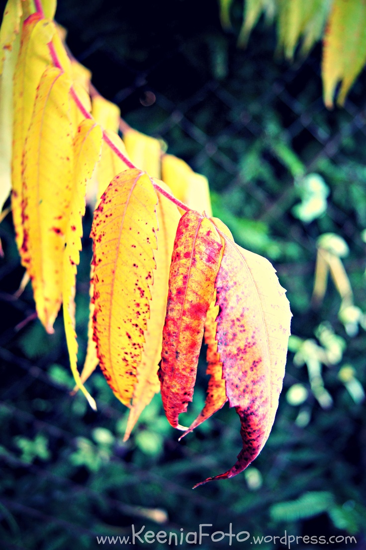 Autumn (http://keeniafoto.wordpress.com/2012/10/10/jesien/#)