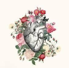 Resultado de imagen para fotos de corazones humanos