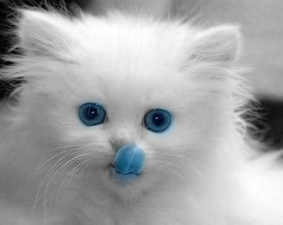 Cats (2) - Best Animal Pictures