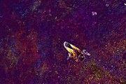 "New artwork for sale! - "" Drake Duck Water Lake Water Bird  by PixBreak Art "" - http://ift.tt/2tN3R6n"