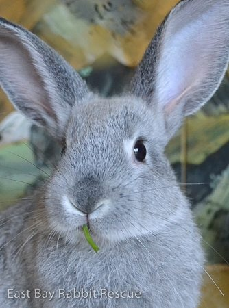East Bay Rabbit Rescue