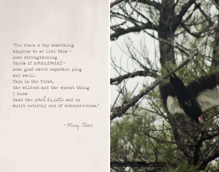 the symbolism of a tree in the black walnut tree a poem by mary oliver An introduction to literature / edition 15 available in paperback allegory and symbolism the black walnut tree, mary oliver.