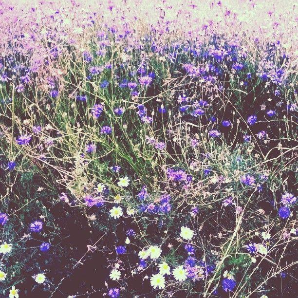 #photo #meadow #grass #flowers #village