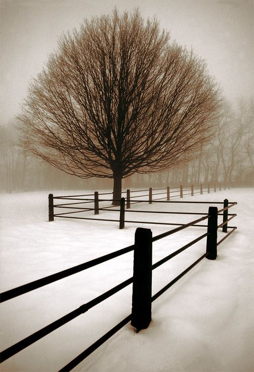 The structure of the bare tree and fence and the monochrome palette of the snow shows perfectly how beautiful simple can be.
