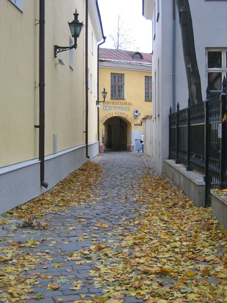 Autumn leaves in Tallinn