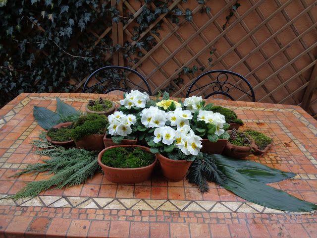 Centrotavola da giardino con primule e muschi https://lefotodiluisella.blogspot.it/2017/03/centrotavola-primule-e-muschio.html