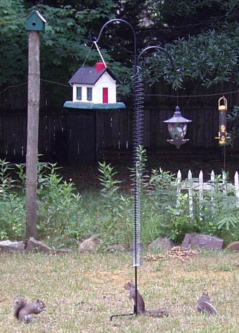 add a slinky to protect your bird feeder from squirrels tips and things bird feeders bird. Black Bedroom Furniture Sets. Home Design Ideas