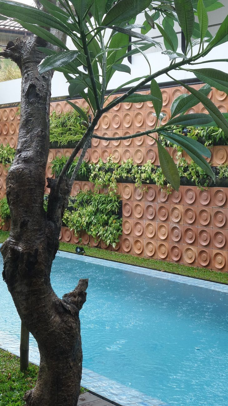 Rain drops, frangipani tree and vertical garden