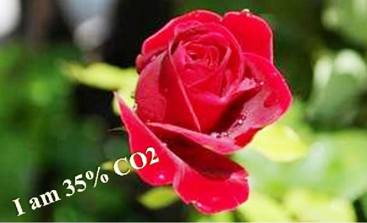 I AM 35% CO2.      Nature builds miracles out of the gas of life