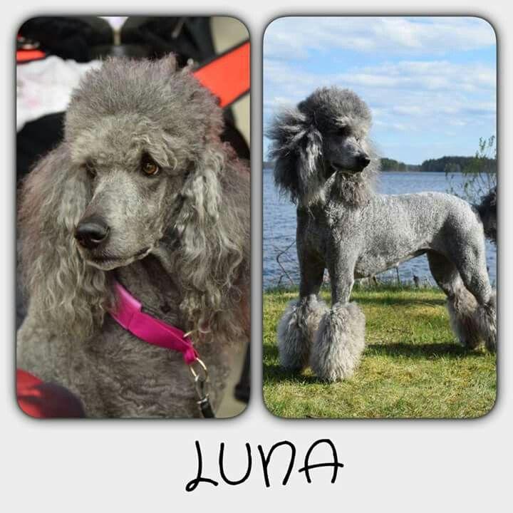 Park Art|My WordPress Blog_Hair Of The Dog Grooming Nyc