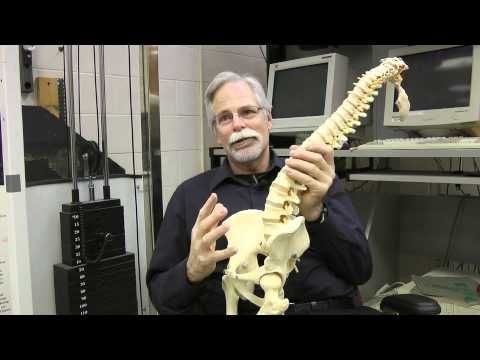 Waterloo's Dr. Spine, Stuart McGill - ćwiczenia na mięśnie brzucha