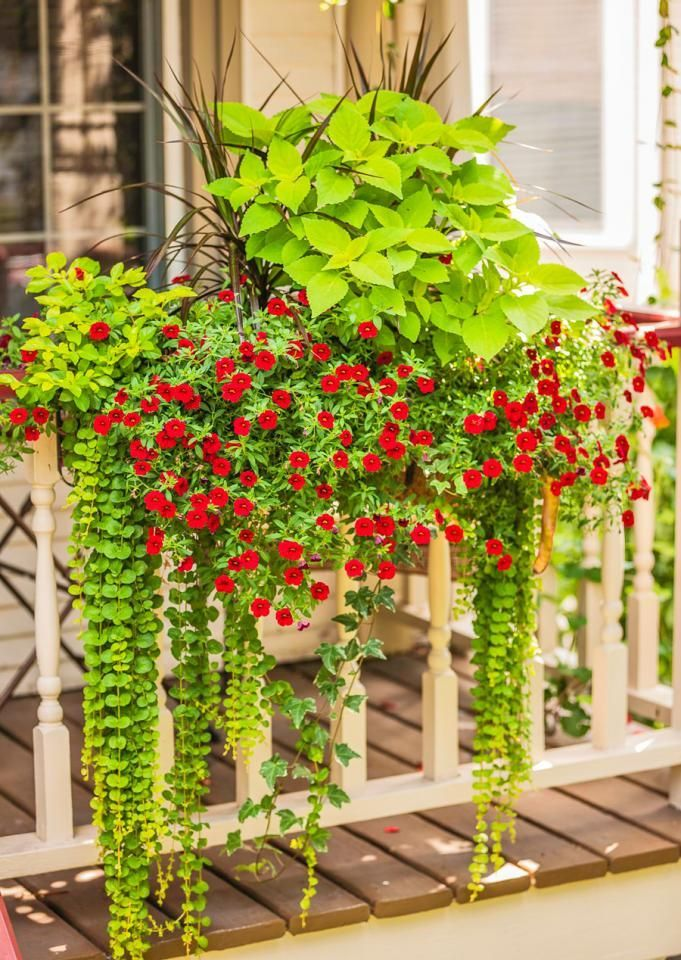 A long planter chock-full of flowers and foliage substitutes for a window  box on - 25+ Best Ideas About Deck Railing Planters On Pinterest Railing