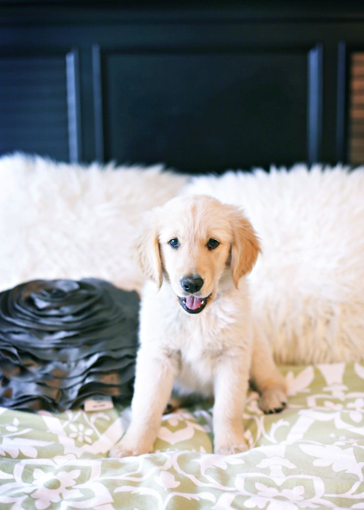 Best Dog Portraits Images On Pinterest - Cute portraits baby and rescue dog