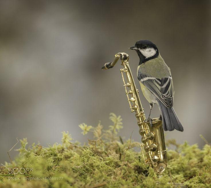 saxophone music bird by geertweggen via http://ift.tt/2fUgTMk
