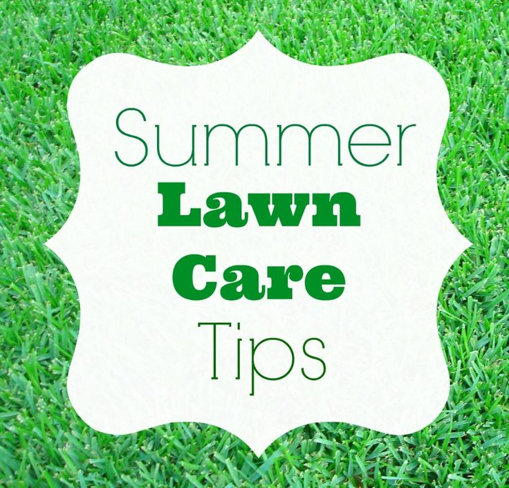17 best images about well groomed lawns lawn care tips