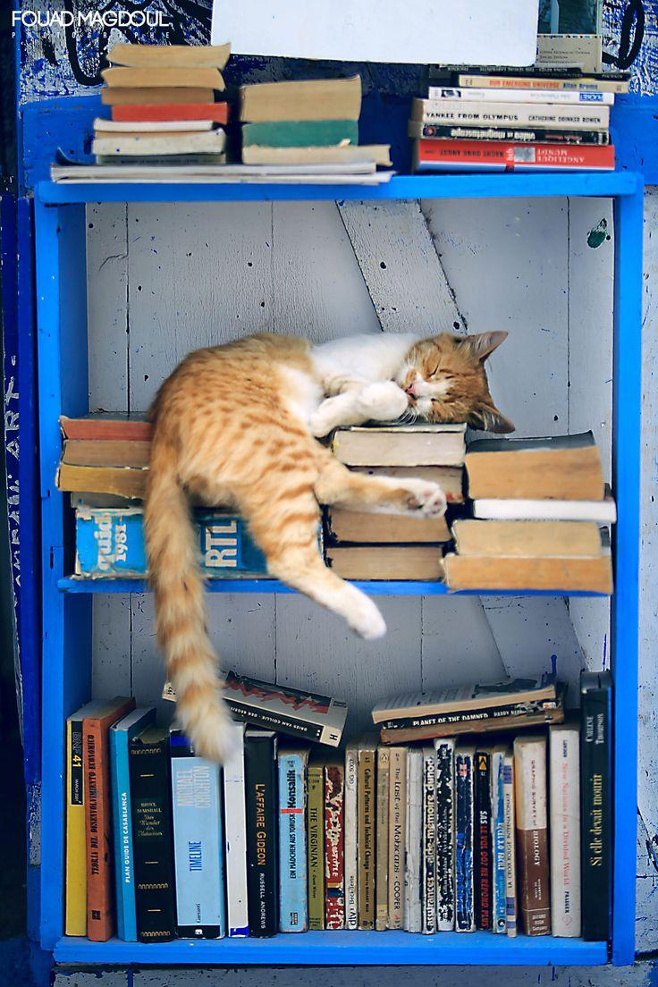 La lecture est une amitié. by Fouad Magdoul on 500px