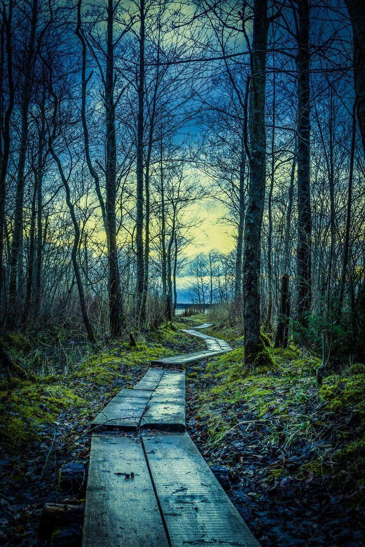 ~~footbridge | blue forest, Latvia | by ecxlv~~