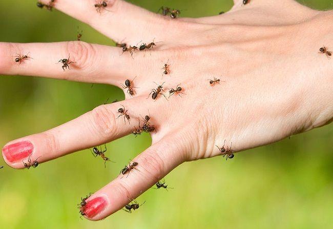 Pozrite si sedem prekvapivo jednoduchých a pritom efektívnych metód, ako sa zbaviť mravcov.