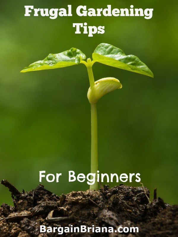 Frugal Gardening Tips For Beginners Gardens The O 39 Jays And Landscapes