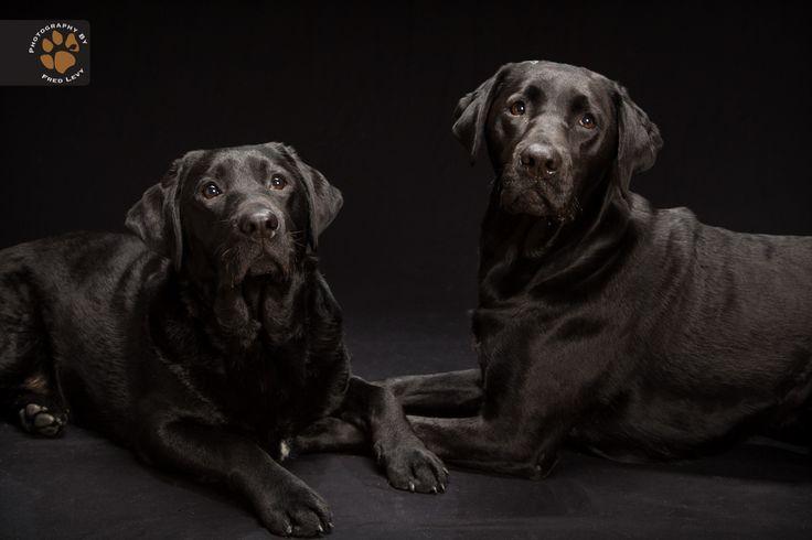 """Fred Levy registra cães de pelagem preta e cria o """"Black dogs project"""" Projeto visa diminuir o preconceito com animais de pelagem pretaFred-Levy-fotografia-cachorros-pelagem-preta-04"""