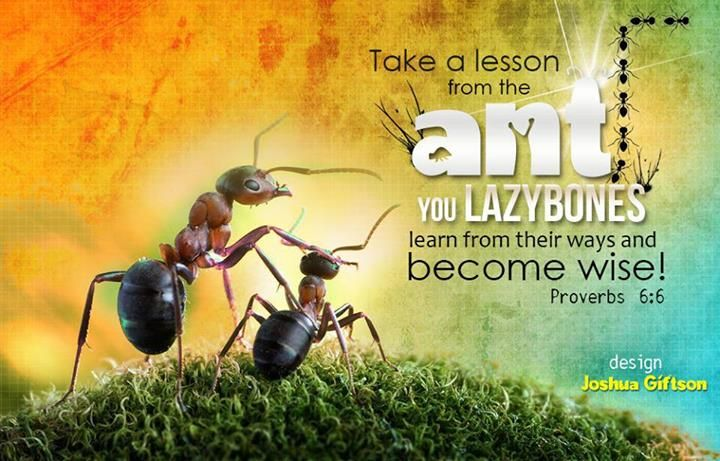 Download HD New Year 2016 Bible Verse Greetings Card & Wallpapers Free: Lesson from Ant Sermons Wallpaper