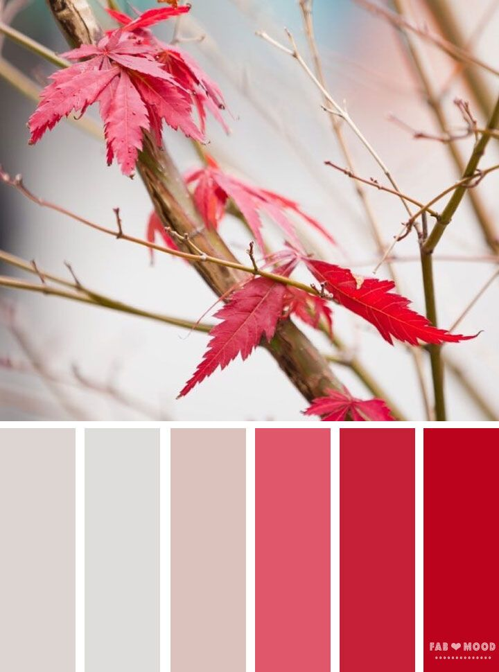 Autumn winter color palette inspired by autumn leaves | red color palette winter autumn