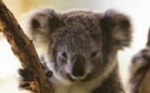 #Sydney Wildlife