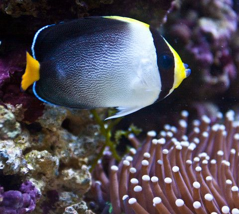 36 best images about weekly sales on pinterest for Doctor fish for sale