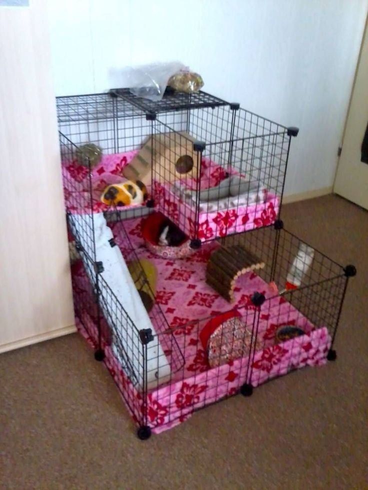 39 best hay rack litter box ideas images on pinterest for Guinea pig cage for 3