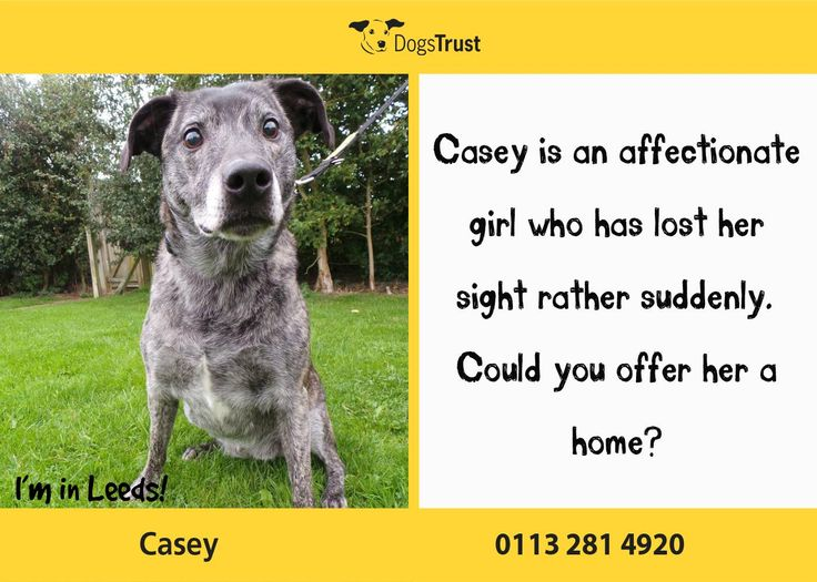 Poor Casey at Dogs Trust Leeds has lost her sight rather suddenly, so as you can imagine, coming into a kennel environment is particularly frightening for her.