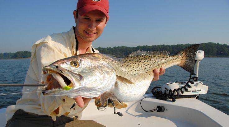 Saltwater Fly Fishing & Light Tackle Fishing: Chesapeake Bay of Virginia