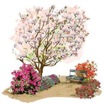 Projet aménagement jardin : Collection d'azalées et rhododendrons