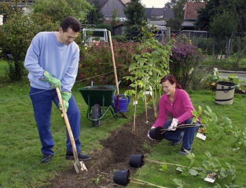 25+ Best Ideas About Himbeeren Pflanzen On Pinterest | Brombeeren ... Brombeeren Pflanzen Und Schneiden Pflegetipps Fur Hobby Gartner